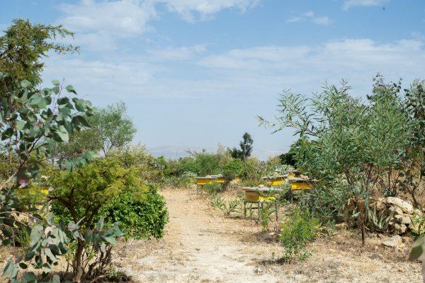 CO2-neutraal CO2 Klimaatpositief  project Ethiotrees